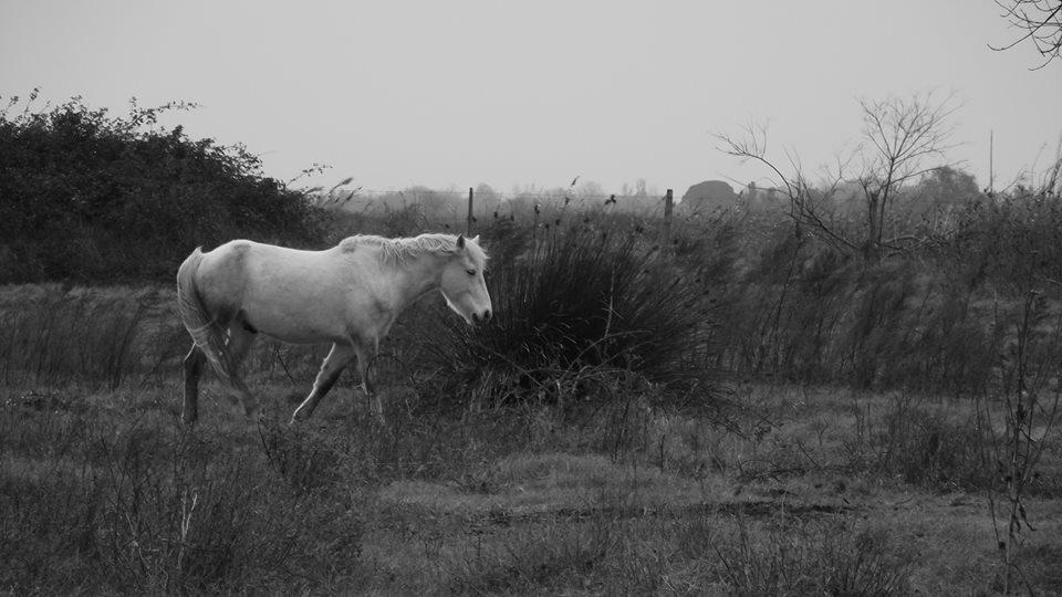 Un camarguais en vadrouille
